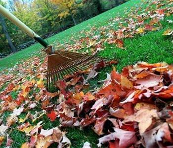Yard Clean Ups