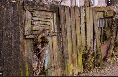 How to Get Rid of Old Timber